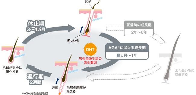 AGA_haircycle